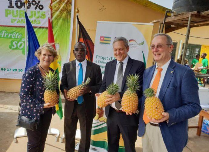 Togo : l'UE et l'Allemagne débloquent environ 6 millions d'euros pour améliorer la compétitivité de la culture d'ananas