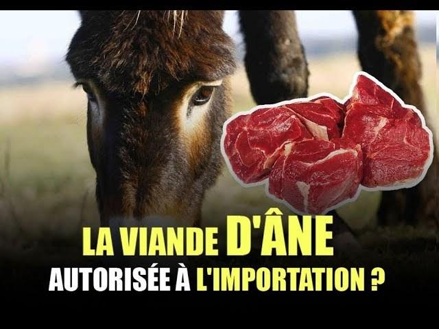 La viande d'âne autorisée à l'importation : les autorités s'expliquent (Vidéo)