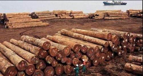 Cameroun : le port de Kribi ravit à celui de Douala les exportations de bois sciés et en grumes de la République centrafricaine