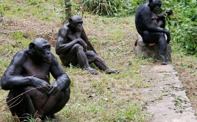 La RDC, deuxième front de la déforestation mondiale