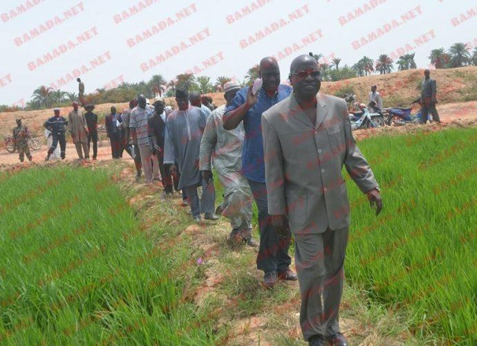 Entreprenariat agricole: L'APEJ et l'Office du Niger veulent réchauffer leur partenariat