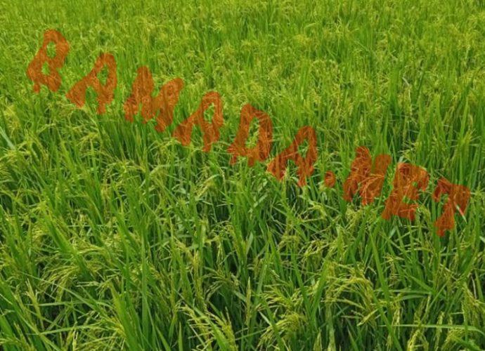 """Emission """"au cœur de l'économie malienne"""" : Zoom sur la filière riz"""