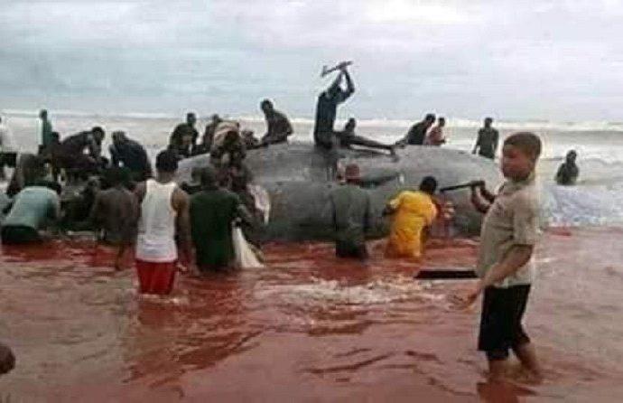[Photo] Une baleine a eu le malheur d'échouer sur une plage africaine !