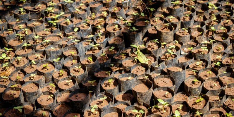 Kangaba : Une association plante 30 000 arbres dans trois communes le long du fleuve Niger