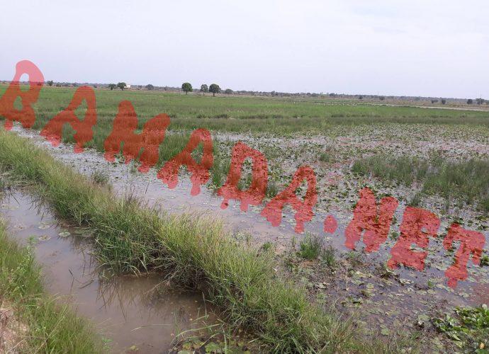 OFFICE DU NIGER Comment l'insécurité affecte le «grenier à riz» du pays