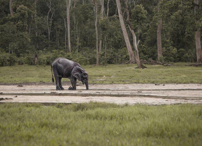 VIDEO. Afrique : un Français en guerre contre le braconnage