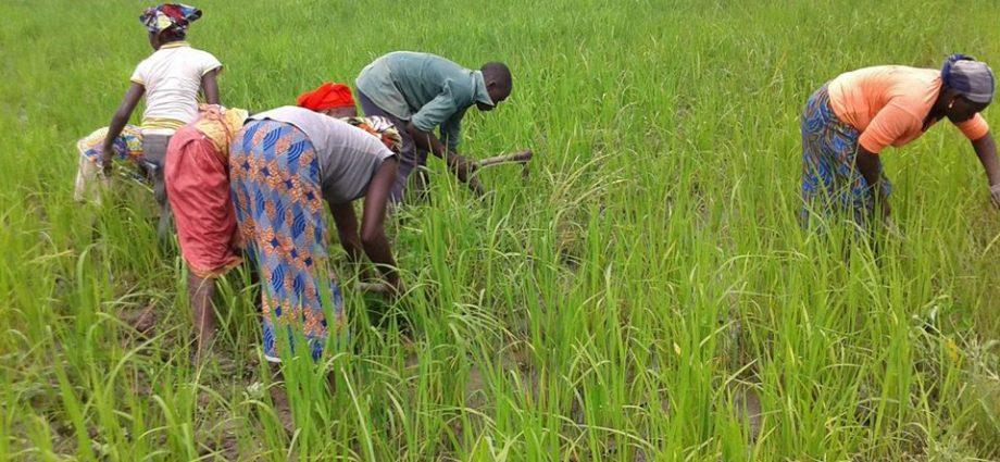 Mali : MACINA: LE PDG DE L'OFFICE DU NIGER EN TOURNÉE POUR S'IMPRÉGNER DE L'ÉTAT D'AVANCEMENT DE LA CAMPAGNE AGRICOLE