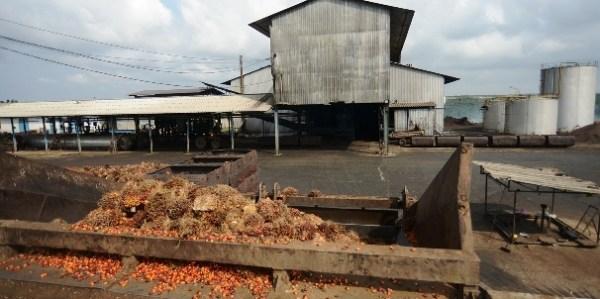 Dividendes 2020: le saint graal pour les actionnaires de Palm Côte d'Ivoire